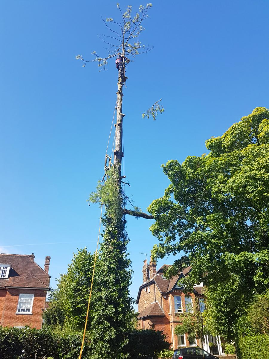 Tree Surgeon Finchley